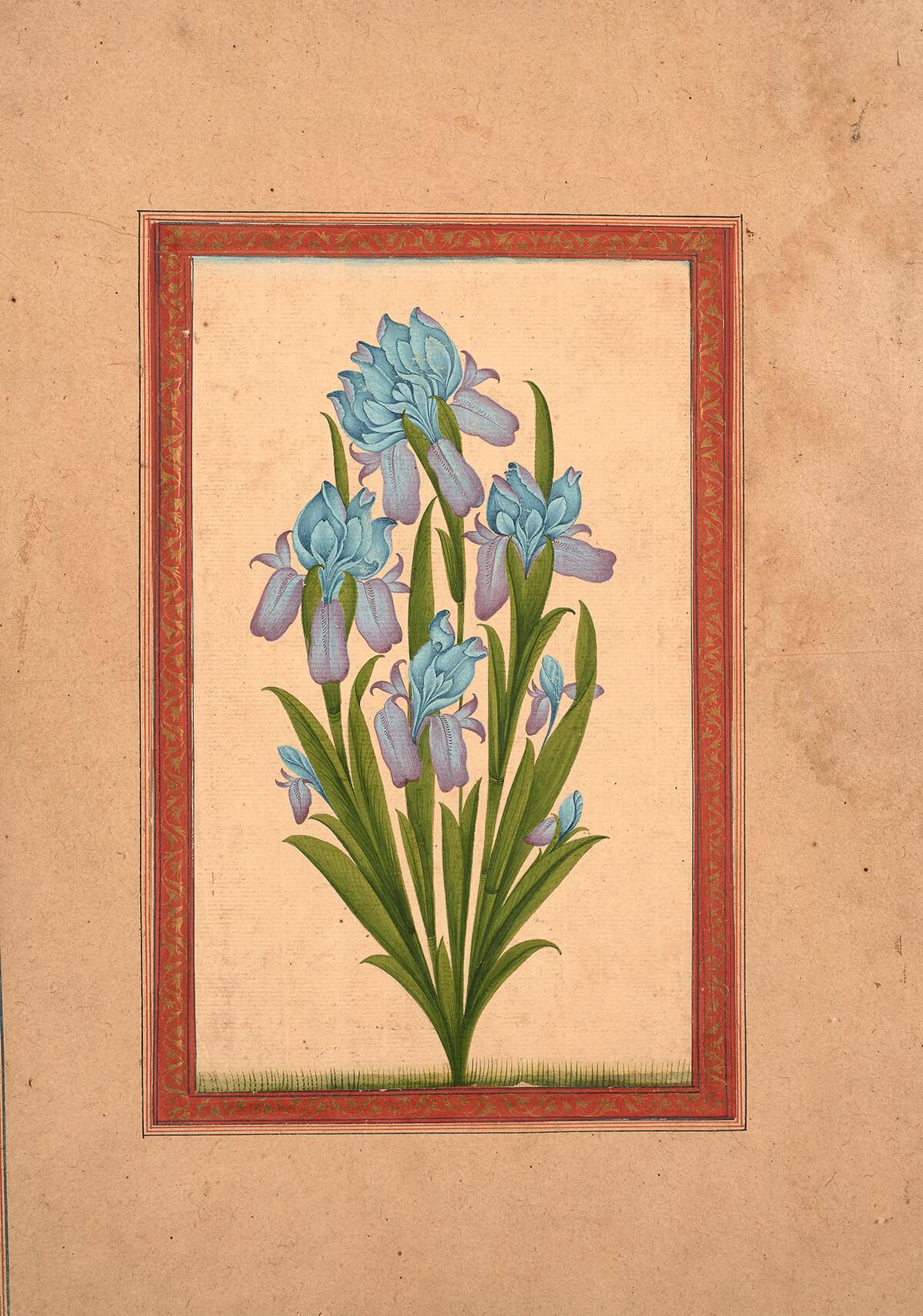 Page d'album à l'iris et à la calligraphie (recto)